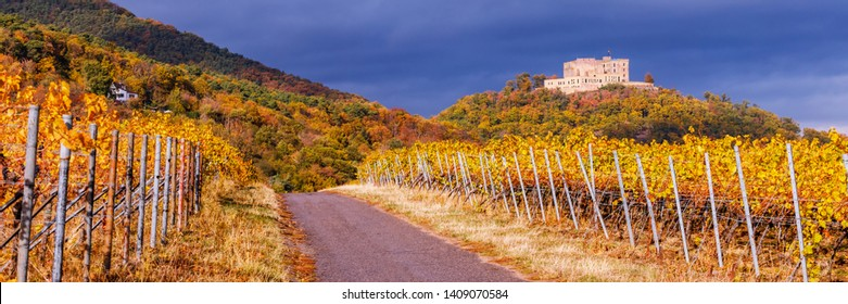 Vineyard Rural autumn landscape. Vineyards Palatinate region, Hambach Castle, German Wine Road, Rhineland-Palatinate, Germany, banner