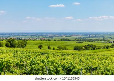 Vineyard Rural landscape. Vineyards Palatinate region, Hambacher Schloss ( Hambach Castle ), Deutsche Weinstrasse ( German Wine Route ), Rhineland-Palatinate, Germany