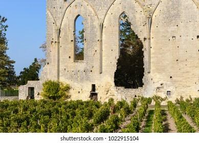 Vineyard at Saint-Emilion, UNESCO World Heritage Site in France