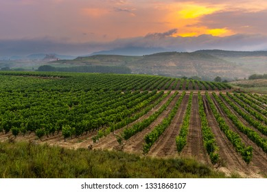 Vineyard with San Vicente de la Sonsierra as background, La Rioja, Spain