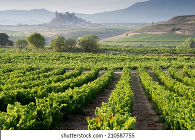 Vineyard and San Vicente de la Sonsierra as background, La Rioja (Spain)
