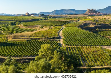 Vineyard, San Vicente de la Sonsierra as background, La Rioja (Spain)