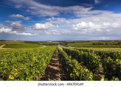 Vineyard Sancerre