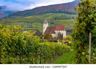 Vineyard in small town in Austria with church and rolling hills in the background during the Fall season