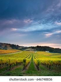 Vineyard in South Australia