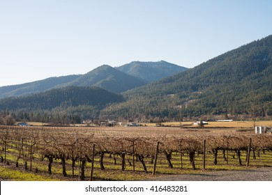 Vineyard in Southern Oregon - Rogue Valley
