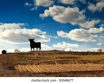 Vineyard in Spain with bull