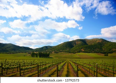 Vineyard in Spring with a Bright Sunny Sky