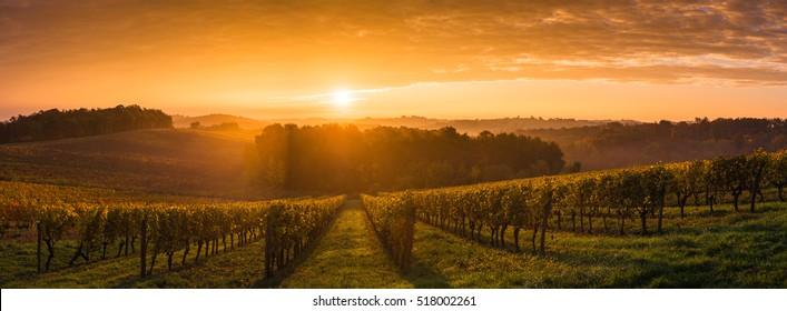 Vineyard Sunrise, Bordeaux Vineyard, France