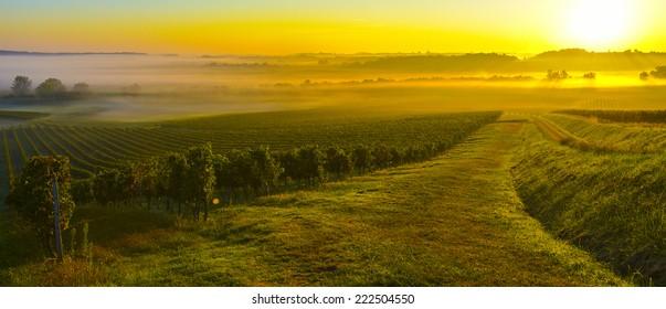 Vineyard Sunrise in Bordeaux Vineyard-France