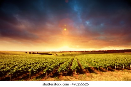Vineyard Sunset in South Australia
