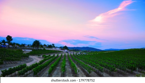 Vineyard in Temecula, California