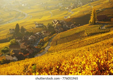 Vineyard terraces in the famous Lavaux wine region (UNESCO World Heritage Site since 2007) overlooking the northern shores of Lake Geneva, Canton of Vaud, Switzerland