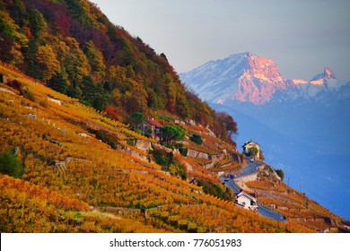 Vineyard terraces in the famous Lavaux wine region (UNESCO World Heritage Site since 2007) overlooking the northern shores of Lake Geneva, Canton of Vaud, Switzerland