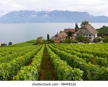 Vineyard terraces in the Lavaux UNESCO World Heritage region, Vaud, Switzerland, Europe