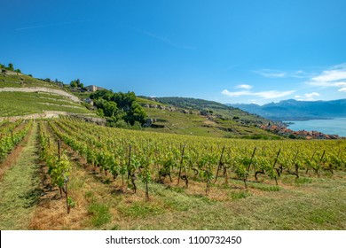 Vineyard terrasses of Lavaux, Switzerland