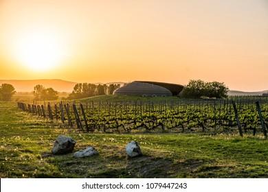 Vineyard in Tokaj at sunset, Hungary