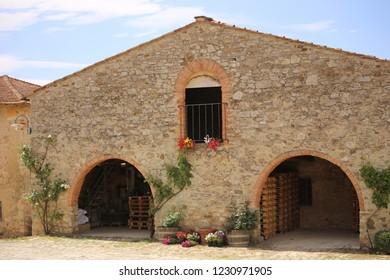 vineyard in Toscana