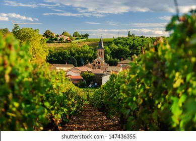 Vineyard and the town of Saint Julien in region Beaujolais, France