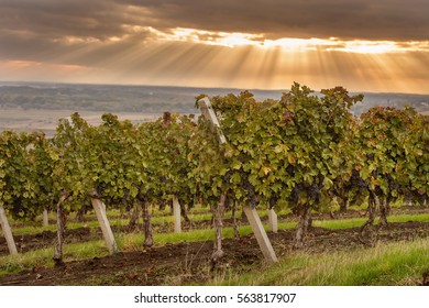 Tuscany Vineyard Images, Stock Photos & Vectors   Shutterstock