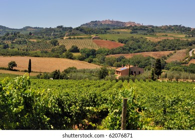A Vineyard in Tuscany under a sunny day