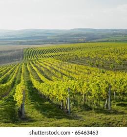 vineyard Ulehle, Czech Republic