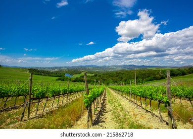 Vineyard in the  Valley San Quirico d Orcia in Tuscany, Italy