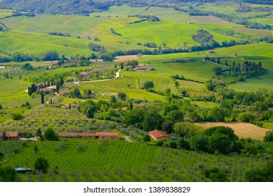 Vineyard valley of Tuscany. Toscana, Italy