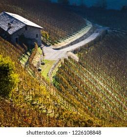 Vineyard in Valtellina (IT)