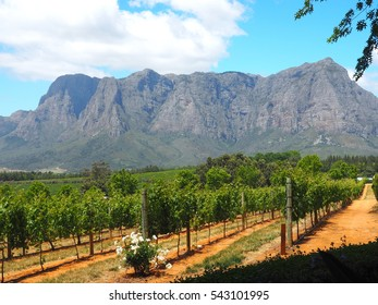 Vineyard view with big rock mountain and cloud and navy blue sky background in wine farm of Delaire Graff Estate, Stellenbosch, Cape Town, South Africa