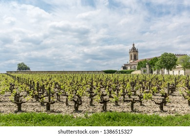 Vineyard in the village of Margaux, in Medoc (France), a famous wine-producing region near Bordeaux