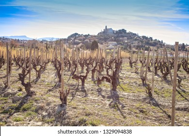 vineyard and village in the south of france