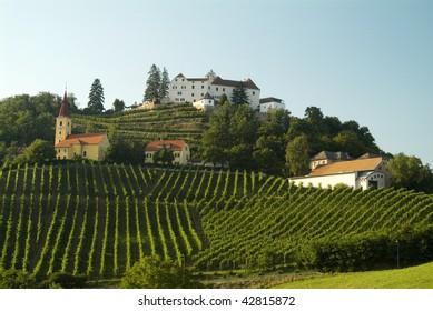 vineyard vine Kapfenstein south styria