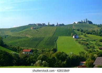 vineyard vine south styria