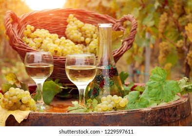 Vineyard and white wine autumn season