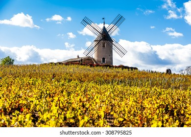 vineyard with windmill near Chenas, Beaujolais, Rhone-Alpes, France