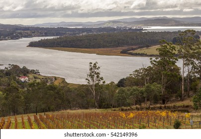 Vineyard and winery on the Tamar river bank viewed from Bradys Lookout in the Launceston region, Tasmania