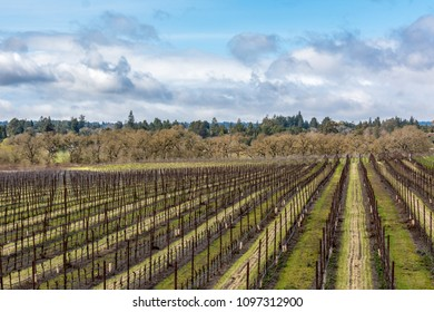 Vineyard in Winter with clouds.