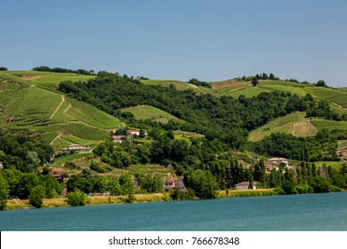 Vineyards along the Rhone River at Verenay, France.