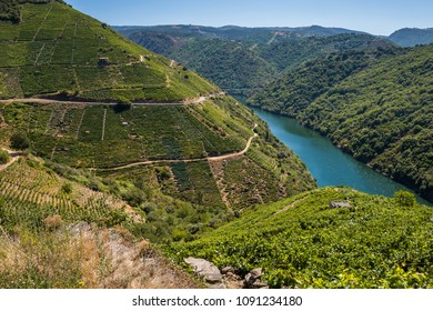 Vineyards along Sil River, Ribeira Sacra, Lugo, Spain