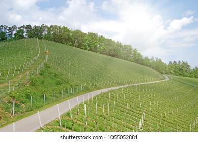 Vineyards along the South Styrian Wine Road in summer, Austria Europe