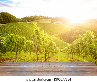 Vineyards along the South Styrian Wine Road in autumn, Austria Europe