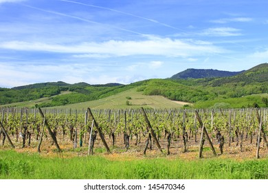 Vineyards in Alsace, on the edge of the Vosges Mountains, France