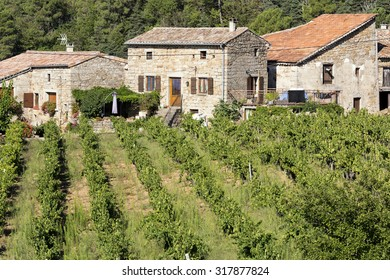Vineyards in the Ardeche district, France