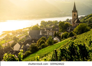 Vineyards around the village of Lorch in Rhine river Germany Europe
