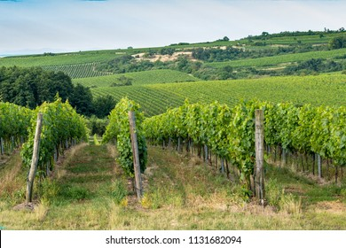 Vineyards around Znojmo