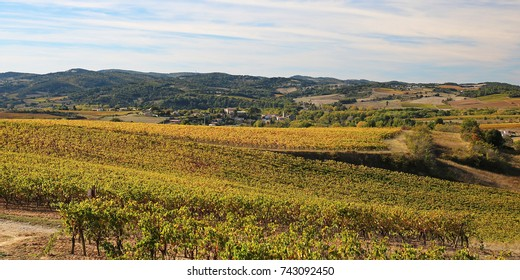 Vineyards of Aude in autumn