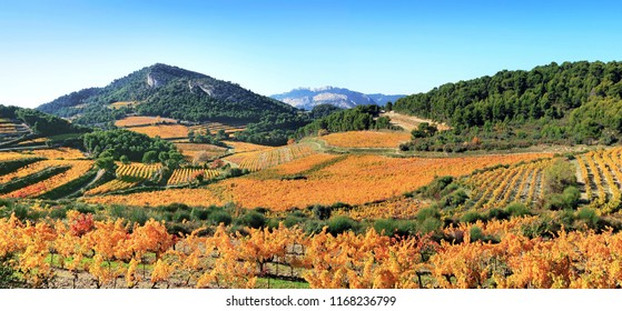 Vineyards in autumn in Provence,France.