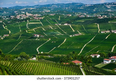 vineyards barolo piedmont italy