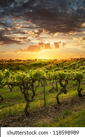Vineyards in the Barossa Valley Australia
